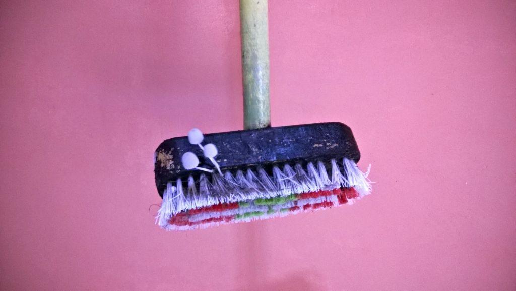 During-rainy-season-mushrooms-grows-on-brooms-lifeinbigtent.com