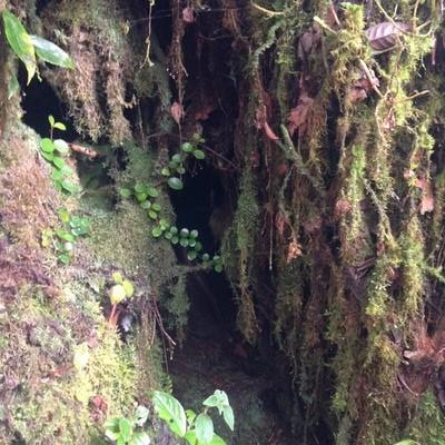 Mossy Forest Trek