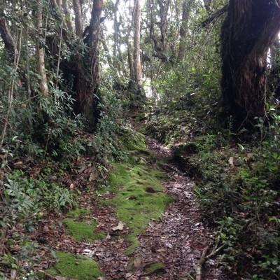 Jungle Trek 3