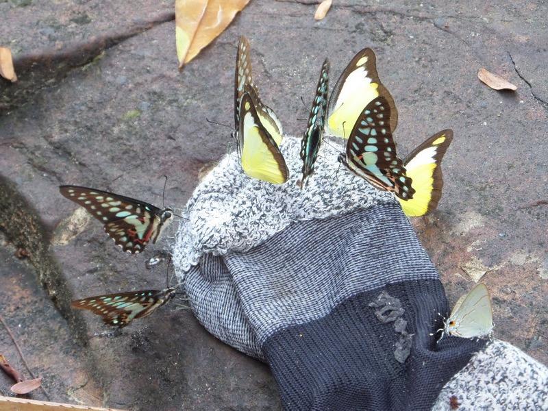 Butterfly Sock