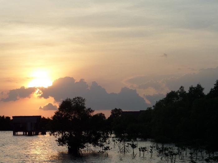 Sunset over mangroves