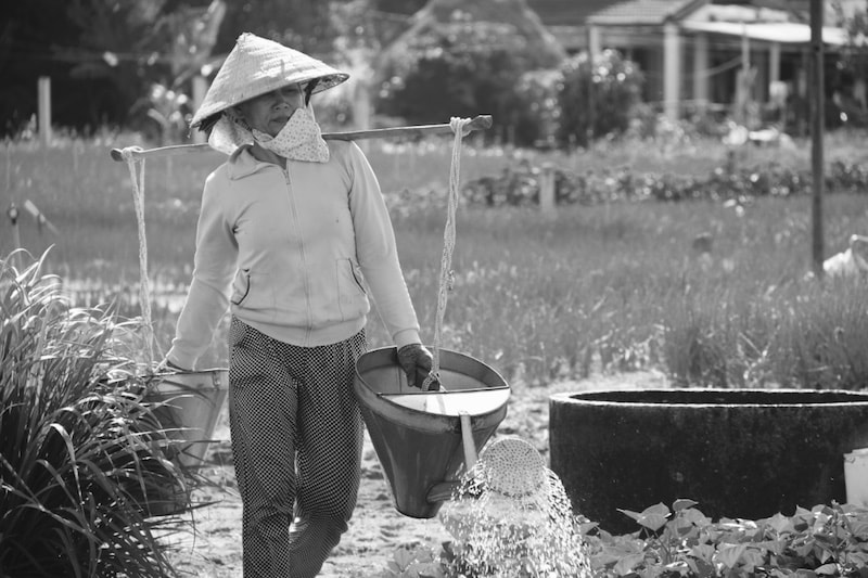 Lady watering her farm in Hoi An, Vietnam