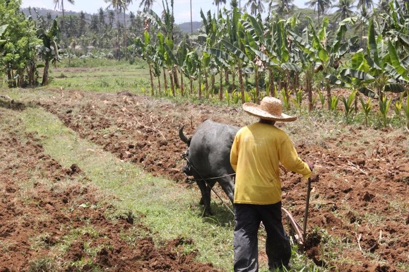 Farmer in Toledo