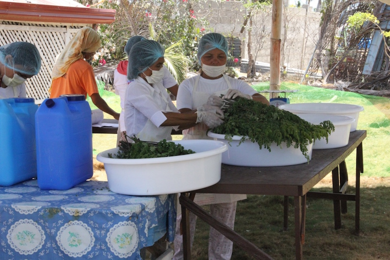 Washing Moringa