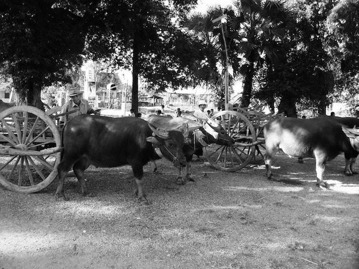 Buffalo Carts