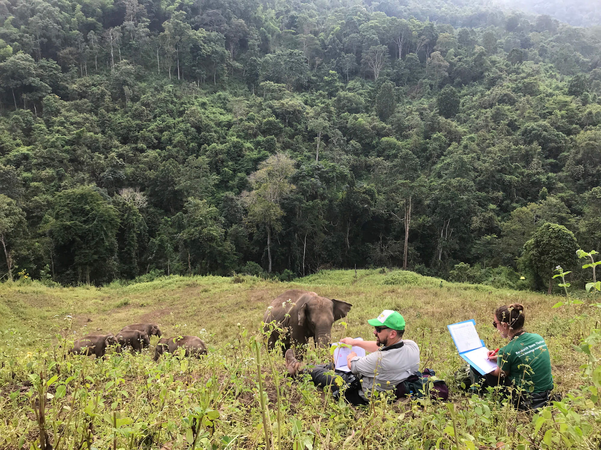 documenting elephants