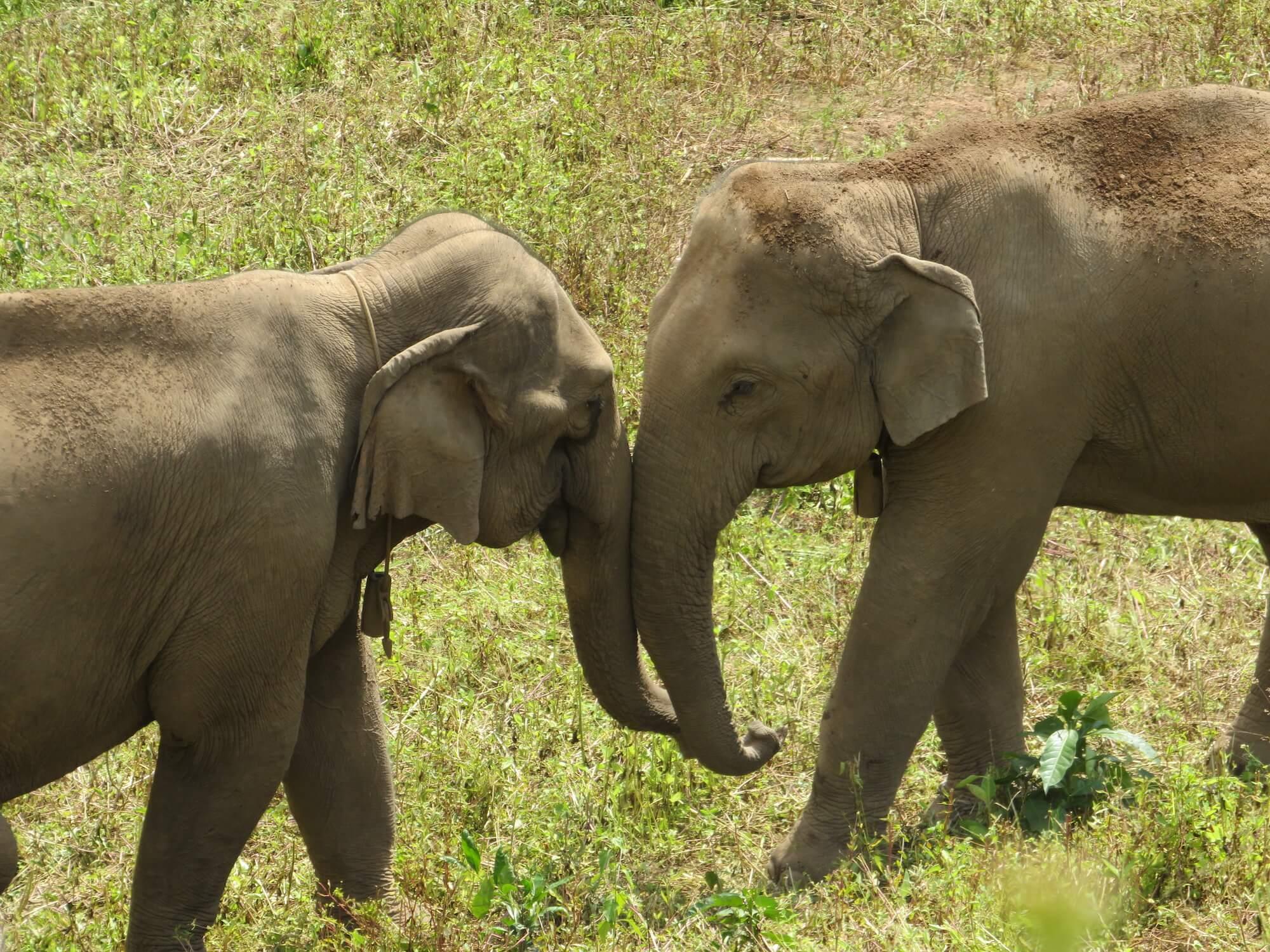 elephants-biosphere-thailand